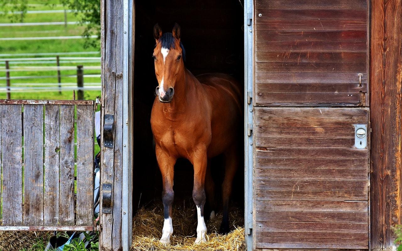 Eigenes Pferd schaut aus dem Stall