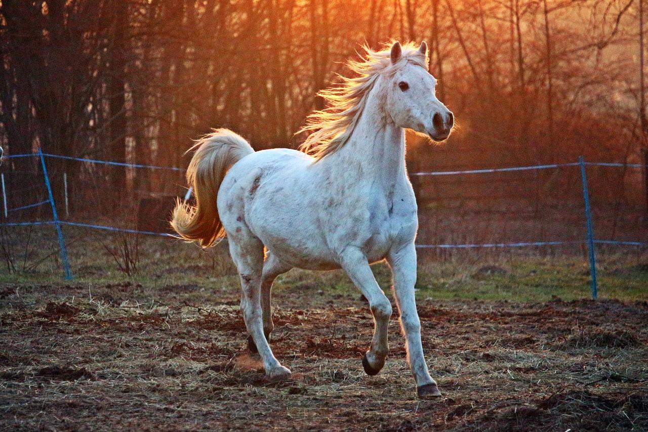 Dein eigenes Pferd liebt die Weide