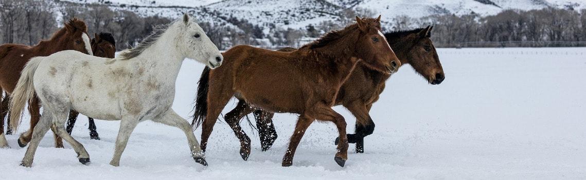 Pferde im Schnee frieren nicht