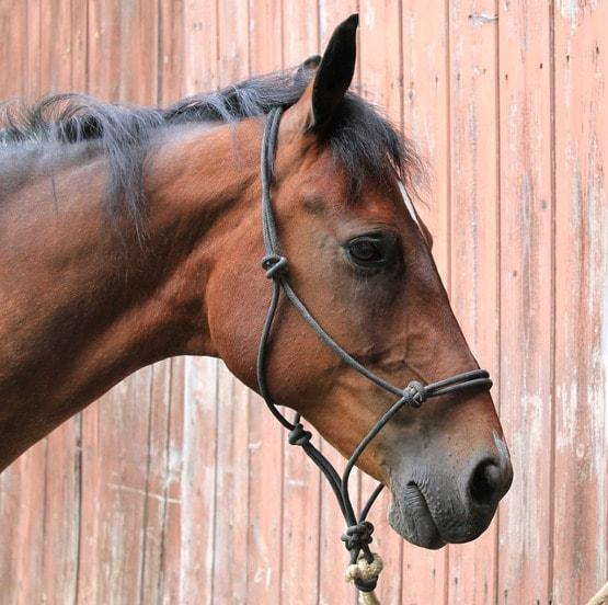 Pferd mit Knotenhalfter