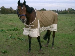 Pferd mit Pferdedecke eingedeckt