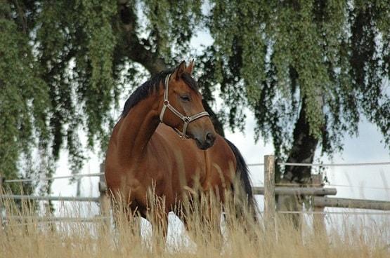 Pferd auf der Weide: Impfungen für Pferde sind wichtig für die Gesundheit