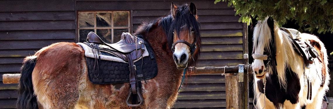 Pferde anbinden: zwei gesattelte Pferde am Anbindebalken
