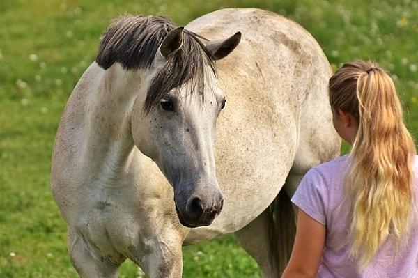 Mädchen kommuniziert mit ihrem Pferd