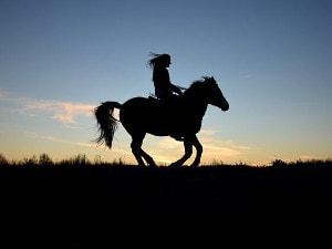 Alles über Kommunikation mit Pferden im Pferdeblog