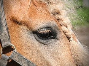 Pferdepflege und Vorsorge