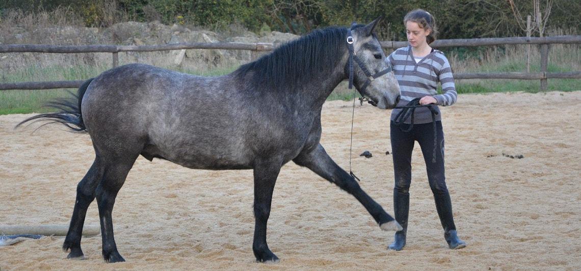 Mädchen macht Bodenarbeit mit ihrem Pferd
