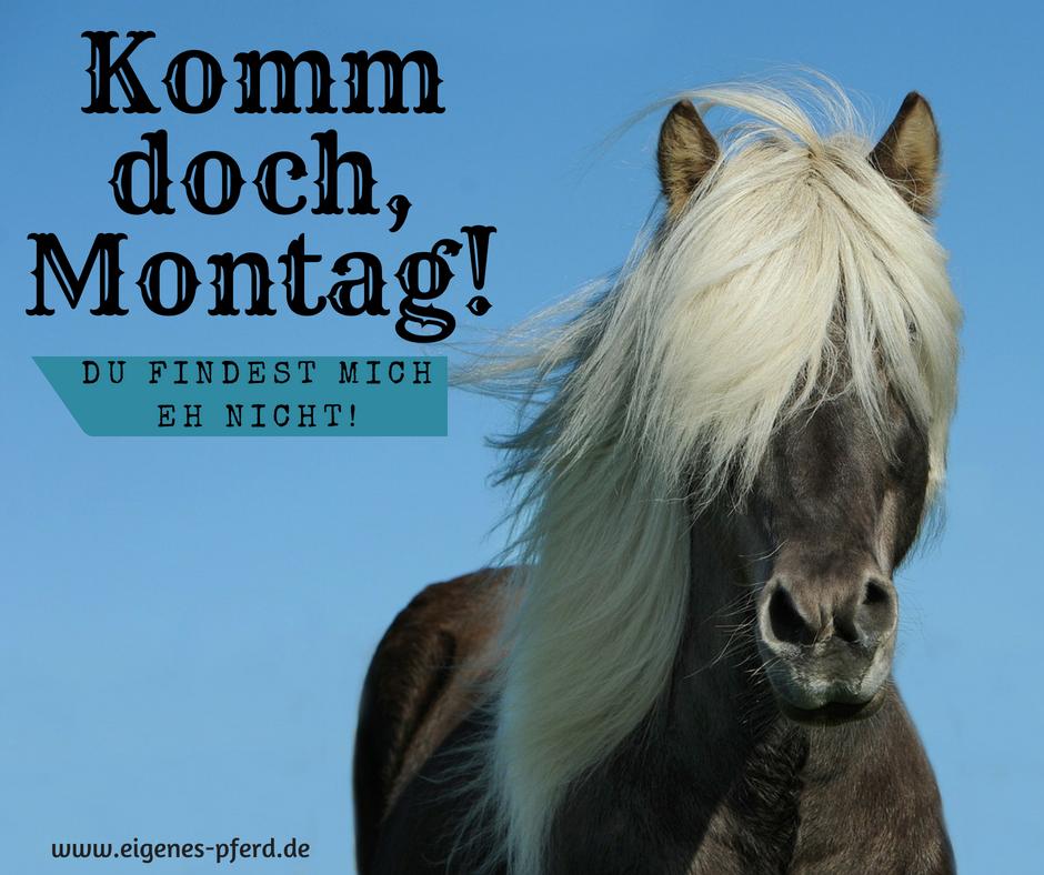 Pferdespruch: Komm doch Montag, du findest mich eh nicht!