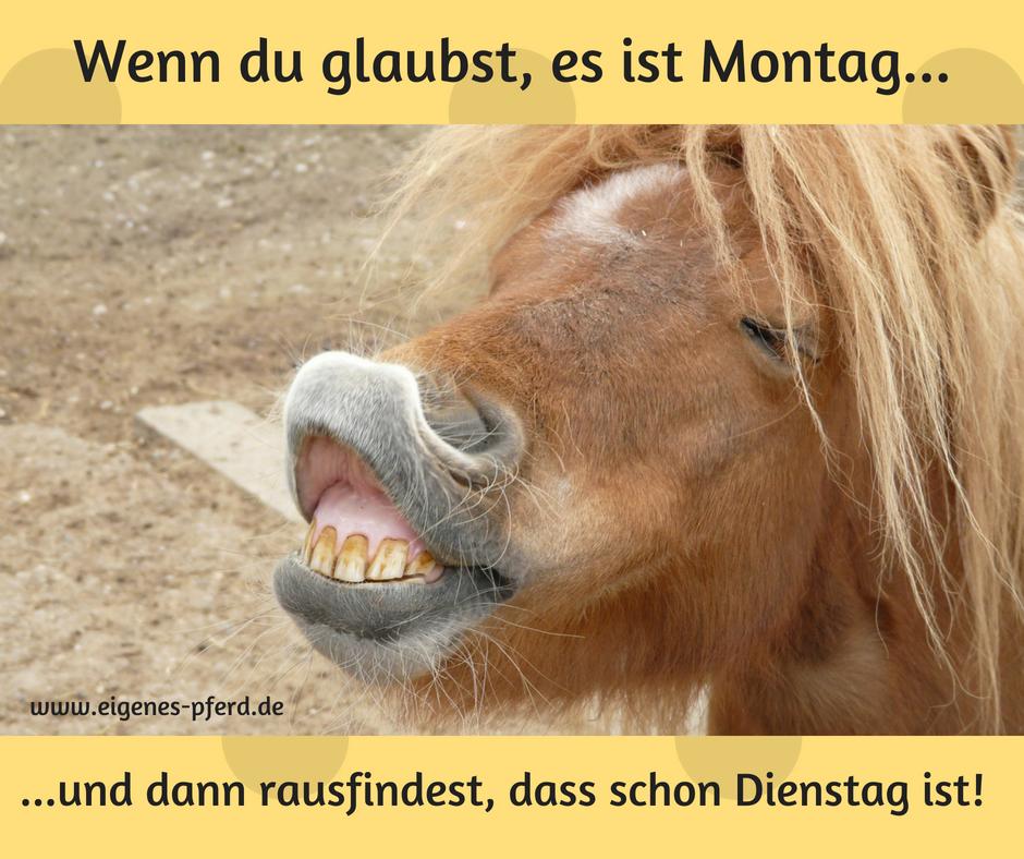 Pferdespruch: Wenn du glaubst, es ist Montag... und dann rausfindest dass schon Dienstag ist!