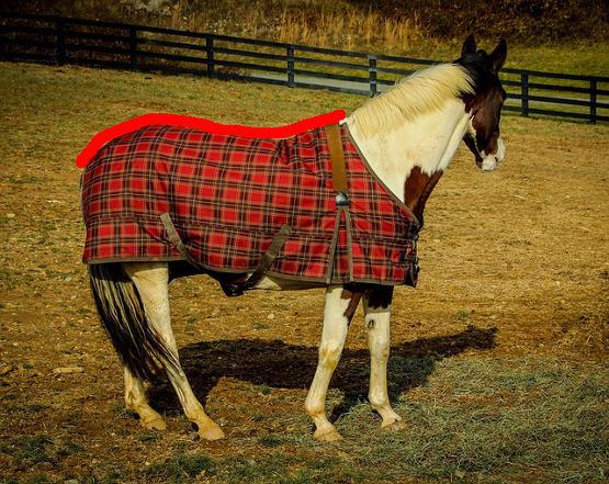Größe der Pferdedecke ausmessen