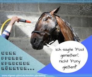 Pferdespruch: Im Sommer unter der Dusche