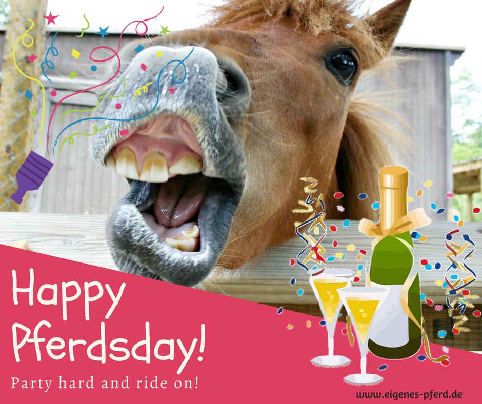 Geburtstag unter Pferden