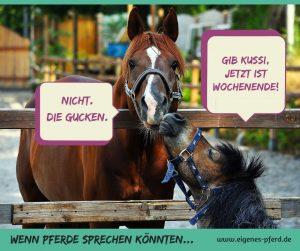 Pferdespruch Wochenende